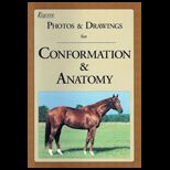 Equine Photos and Drawings for Conformation and Anatomy