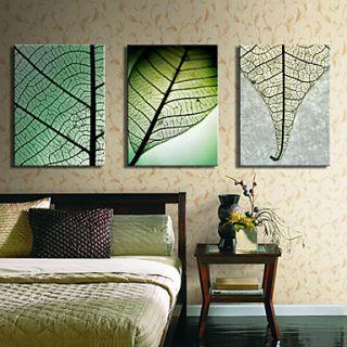 Stretched Canvas Art Botanical Leaves Set of 3