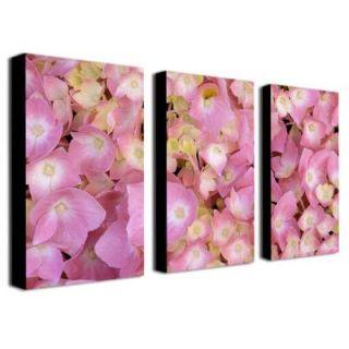 Trademark Fine Art 18 in. x 32 in. Pink Hydrangea by Kathie McCurdy 3 Piece Canvas Art Set KM0102 set