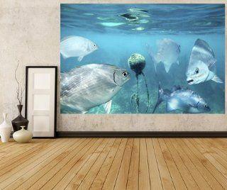 WM134   Lowfin Chub Fische Unterwasser. unter dem Meer Fototapete. Peel und Stick selbstklebende Tapete. Peel und Stick Wandbild Fototapete Art Fever TM UK Baumarkt