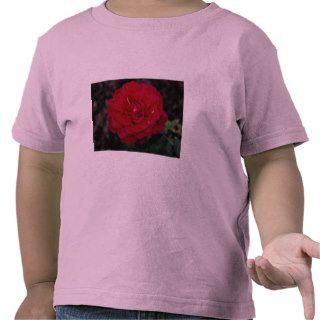 Beautiful Hybrid Tea Rose 'Mister Lincoln' Tshirts