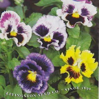 'Petticoat' Pansy Seeds   Annual   100 mg : Flowering Plants : Patio, Lawn & Garden