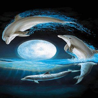Dolphins Live Wallpaper: Appstore for Android