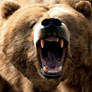 Angry Bears Live Wallpaper: Appstore for Android