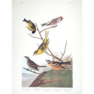 "Art Arkansaw Siskin, Mealy Red poll, Louisiana Tanager, Townsend's Finch, Buff breasted Finch. ""Birds of America"" (Amsterdam Edition) (Pl. 400)  Lithography  John James Audubon"
