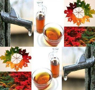 4 Packs x 10 Sugar Maple Tree Seeds   Northern Sugar Maple   ACER saccharum Seed   WIDE RANGE OF FALL COLORS   Make Your Own Maple Syrup Today   Zone 3   8   By MySeeds.Co  Vegetable Plants  Patio, Lawn & Garden