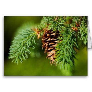 Christmas Evergreen Pine Cone Needles Tree Trees Cards