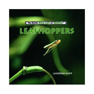 Leafhoppers (Really Wild Life of Insects): Andrew Hipp: 9780823962419:  Kids' Books