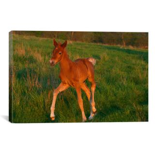 Little Brown Pony by Carl Rosen Painting Print on Canvas by iCanvas