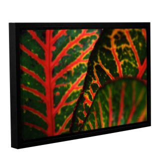 Croton Abstract by Kathy Yates Floater Framed Photographic Print on