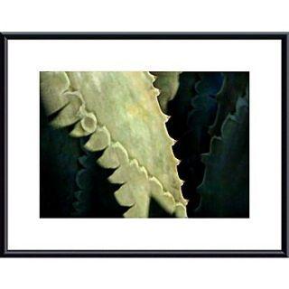 Printfinders Agave Thorns by John K. Nakata Framed Photographic Print; Black