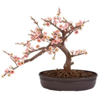 Nearly Natural 15 in. H Pink Cherry Blossom Bonsai Silk Tree 4764