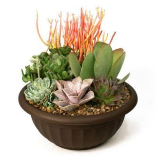 Succulent Garden Plant Your Own Kit 0881011