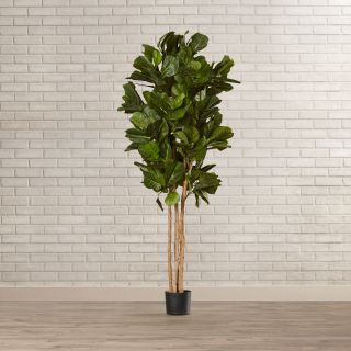 Brayden Studio Fiddle Leaf Fig Tree in Pot